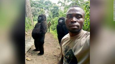 190422153943-gorillas-selfie-virunga-national-park-exlarge-169