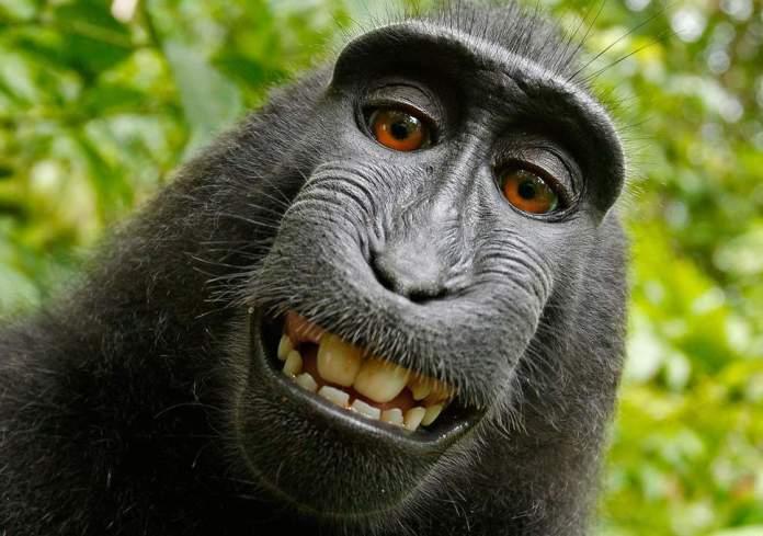 naturo-monkey-selfie